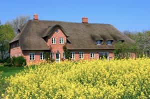 Bauernhof Rügen - Hier: Reetdachhaus vor Rapsfeld